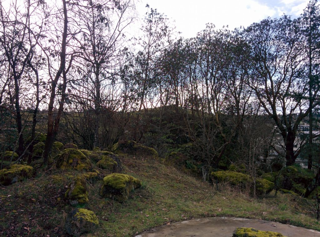 A path curves through the foreground of the image. Beyond it is a hillside covered in fresh shoots of grass, with mossy rocks scattered about. Trees crowd into the sky, dormant and leafless now in the late winter.