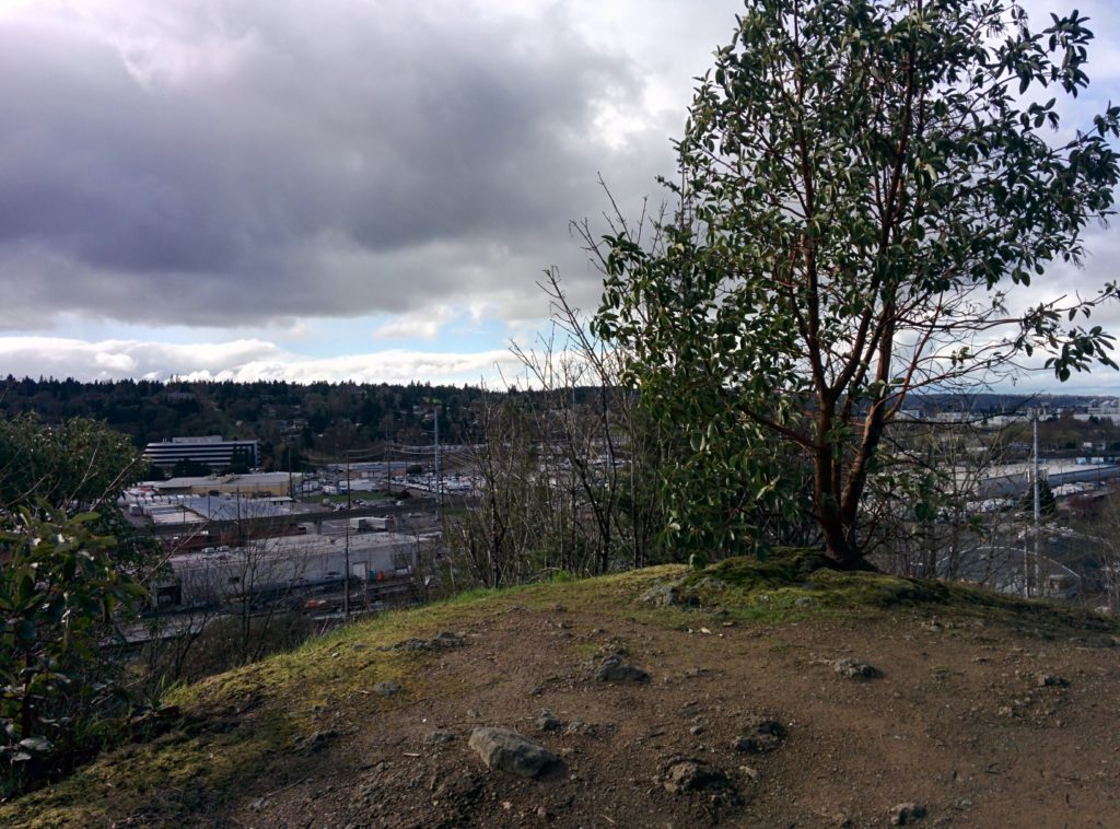 A grassy peak, topped with a few scrubby trees. Grey clouds cover most of the sky. Beyond the peak is an industrial area, far below.