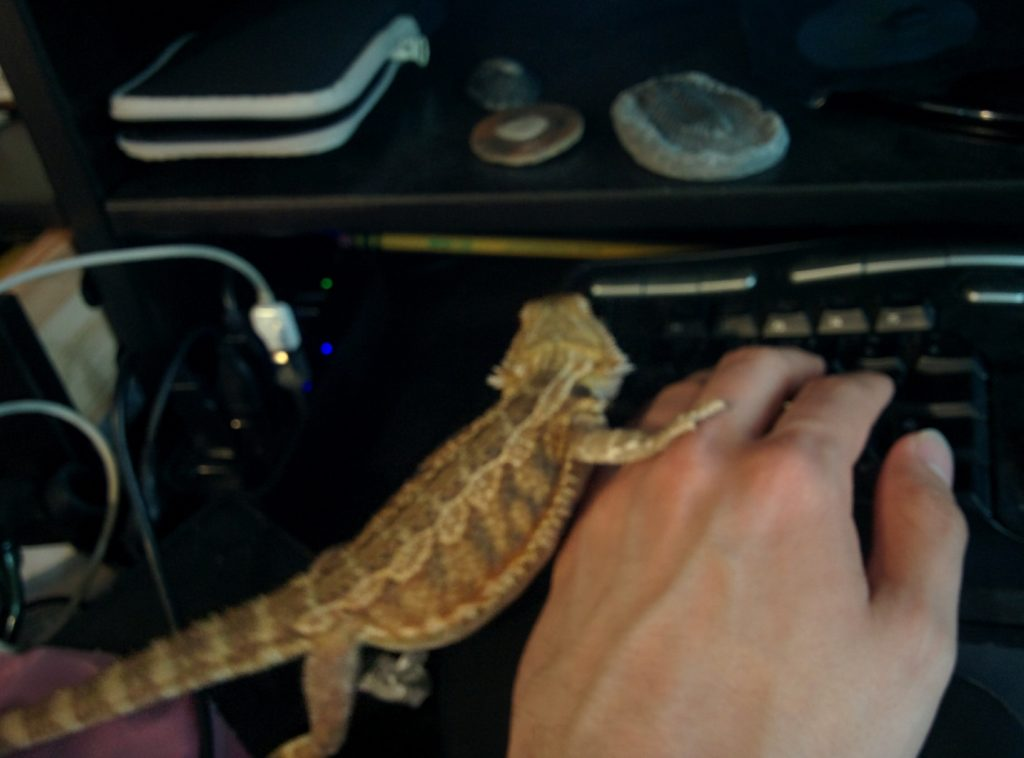 Picture of a left hand in typing position on a keyboard. A small bearded dragon lizard stands next to the hand, facing away from the camera, with one foot on the hand.