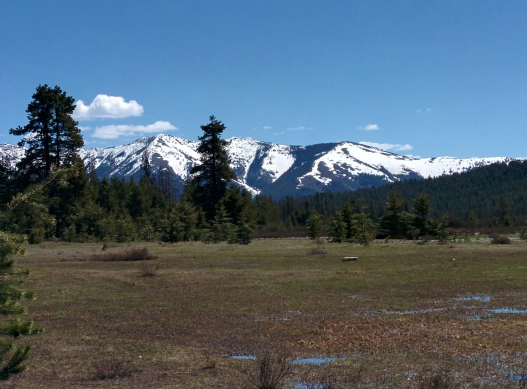 A muddy meadow takes up the lower half of the picture, receding into a deep green evergreen forest approximately a quarter mile away. Beyond that, snow-capped mountains thrus up into a pale blue sky with only a few clouds visible.