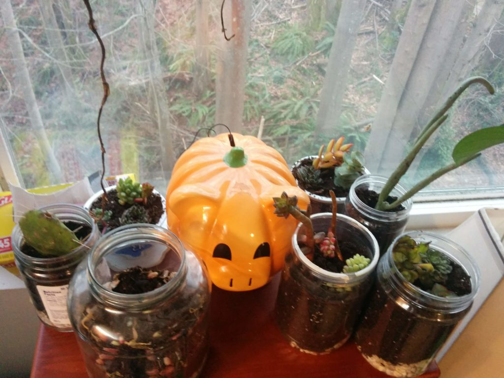 A bunch of succulent cuttings, potted in plastic and glass containers, surrounding a jack-o-lantern colored piggy bank.