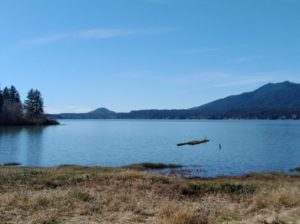 A picture of lake quinalt under a blue sky. The bank is visible in the foreground, and low hills surround the lake.